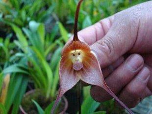 Orquídeas, um presente da natureza
