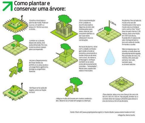 Como plantar e conservar uma árvore