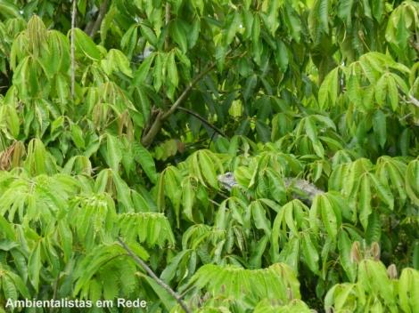 iguana-camuflada