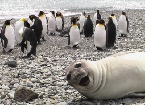 Animal-Photobombs-15