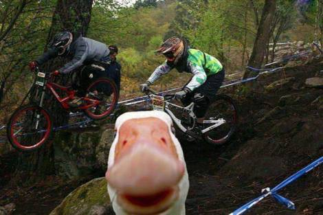 animals-photobomb-2131