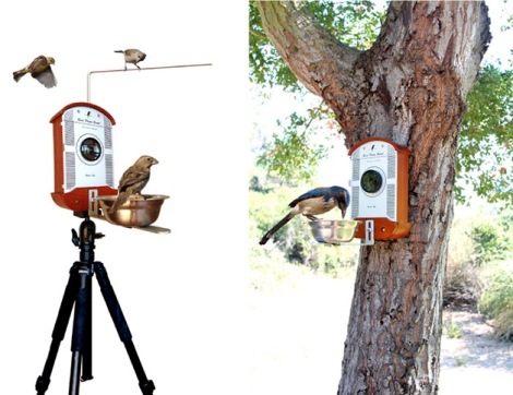 birdphotobooth2