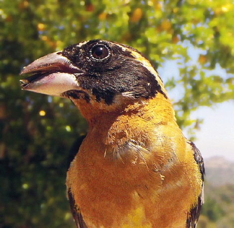 birdphotobooth5