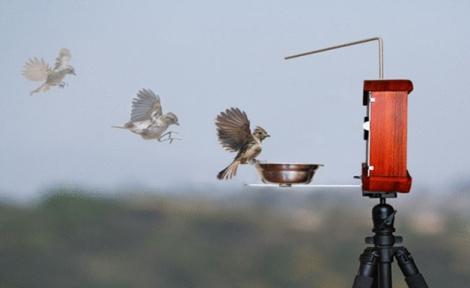 birdphotobooth9
